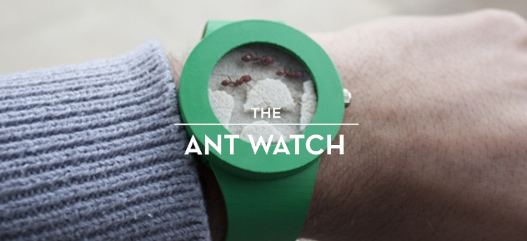 ant-watch