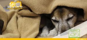SnugglePad Hundeschlafsack