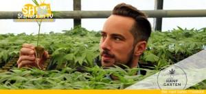 Hanfgarten verkauft Hanfpflanzen